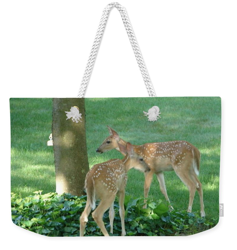 Witetail Deer Weekender Tote Bag featuring the photograph Whitetail Fawns by Randy J Heath