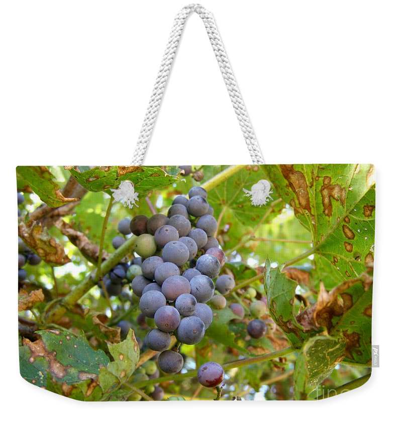 Wild Grapes Weekender Tote Bag featuring the photograph Wild Grapes by Angie Rea