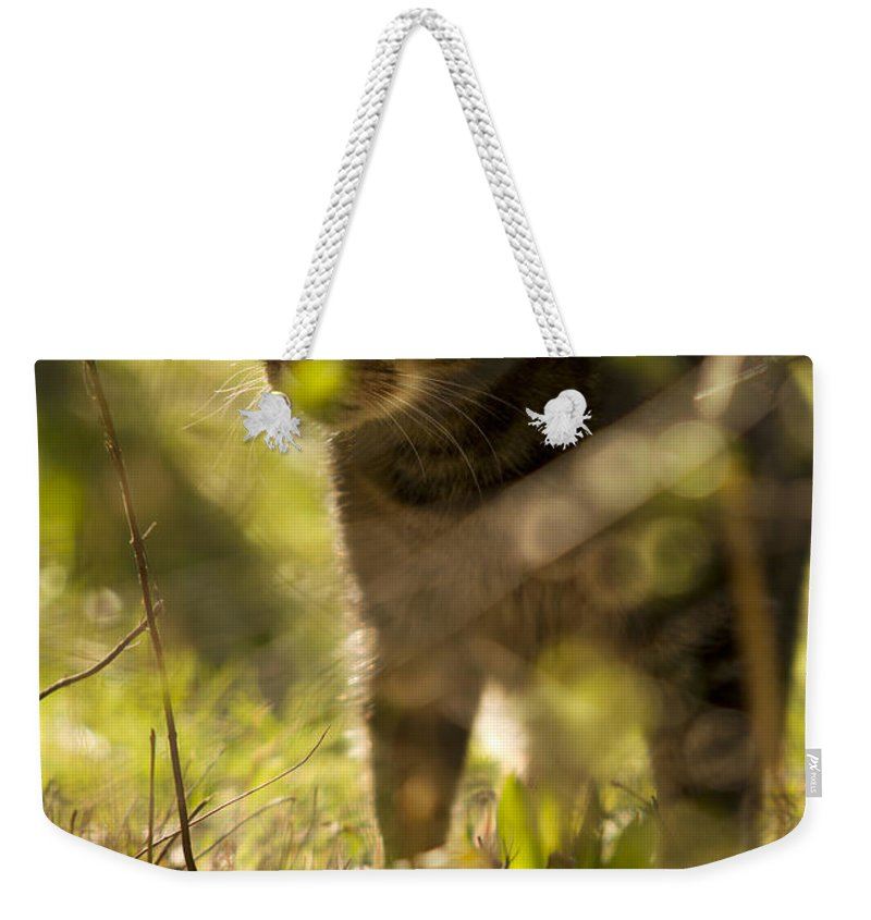 Cat Weekender Tote Bag featuring the photograph Wonky Eyed Tiger by Angel Ciesniarska