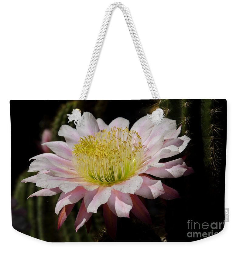 Pink Weekender Tote Bag featuring the photograph Pink Cactus Flower by Jim And Emily Bush