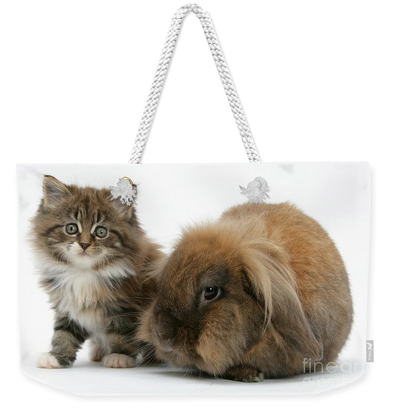 Animal Weekender Tote Bag featuring the photograph Kitten And Rabbit by Mark Taylor