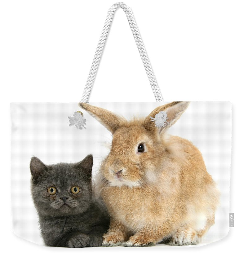 Nature Weekender Tote Bag featuring the photograph Kitten And Rabbit by Mark Taylor