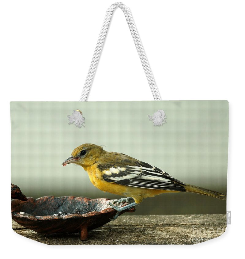 Oriole Weekender Tote Bag featuring the photograph Oriole by Lori Tordsen