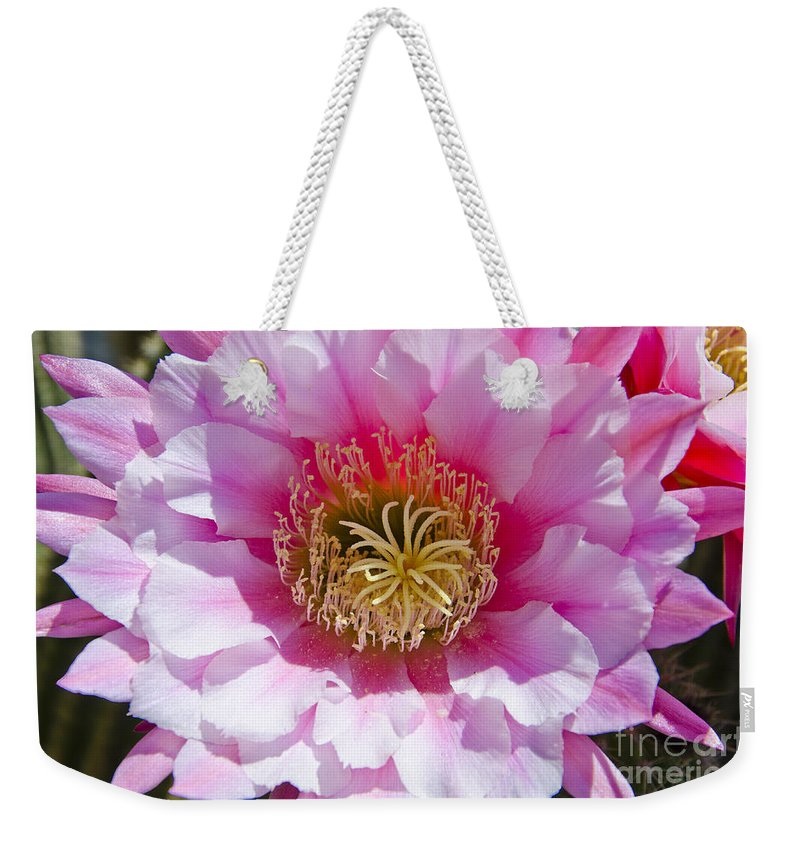 Spring Weekender Tote Bag featuring the photograph Pink Cactus Flower by Jim And Emily Bush