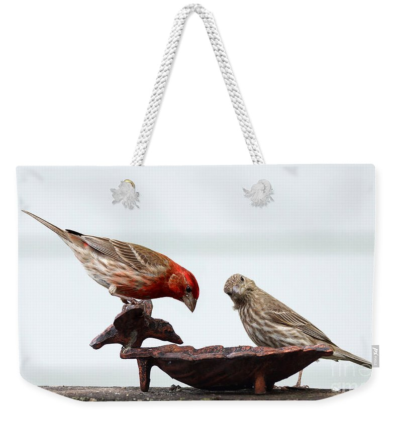 Finch Weekender Tote Bag featuring the photograph House Finch by Lori Tordsen
