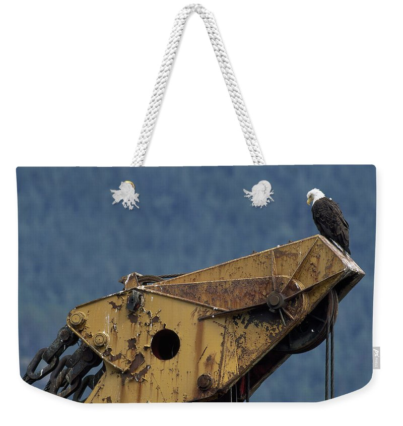 haines Weekender Tote Bag featuring the photograph A Northern American Bald Eagle by Norbert Rosing