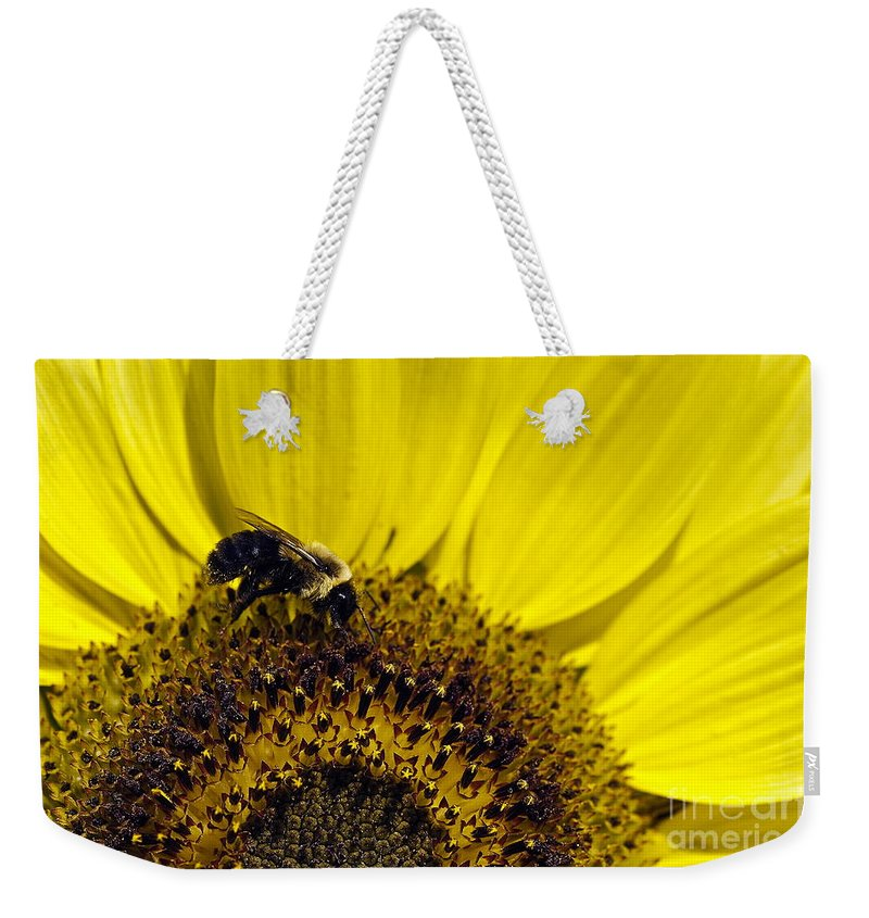 Helianthus Annuus Weekender Tote Bag featuring the photograph Bee And Sunflower by John Greim