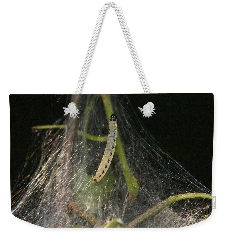 Jouko Lehto Weekender Tote Bag featuring the photograph Bird-cherry Ermine Caterpillars by Jouko Lehto