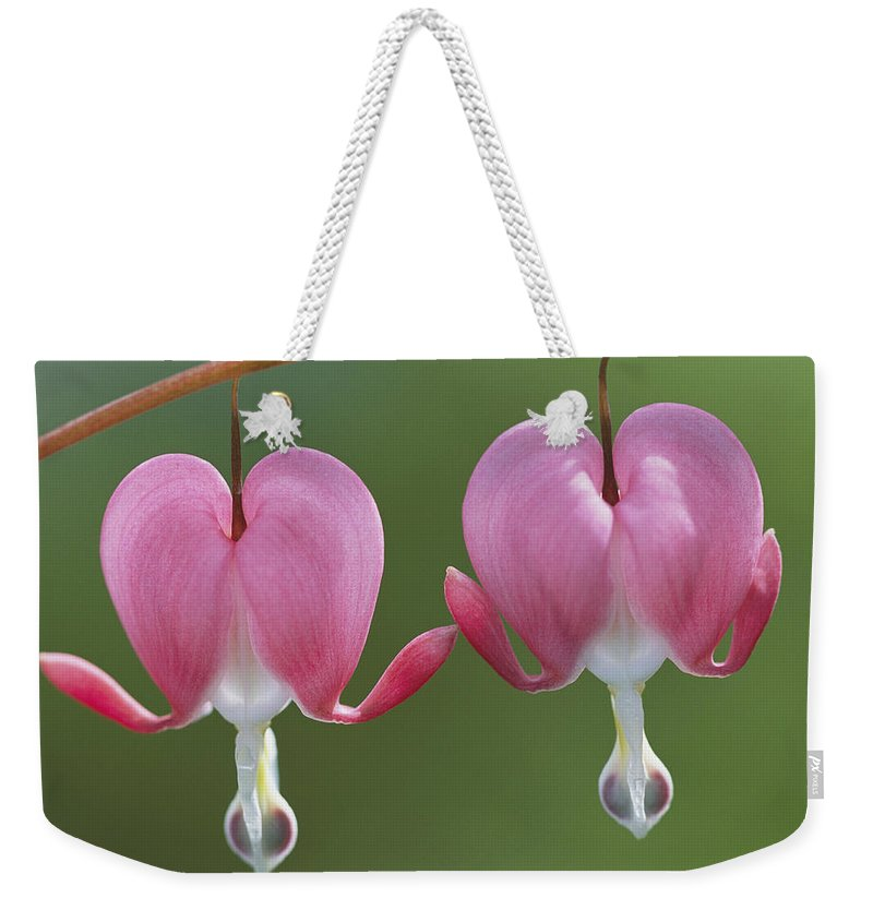 Plants Weekender Tote Bag featuring the photograph Close View Of Dutchmans Breeches, Or by Darlyne A. Murawski
