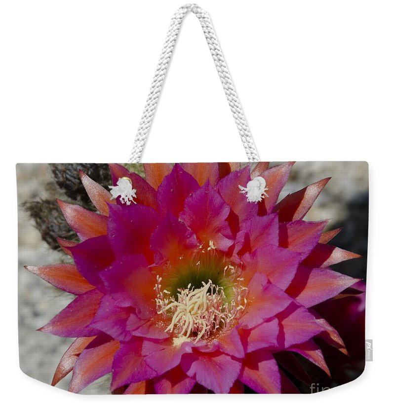 Red Weekender Tote Bag featuring the photograph Dark Pink Cactus Flower by Jim And Emily Bush