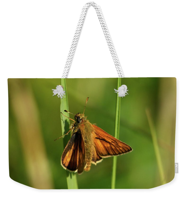 Jouko Lehto Weekender Tote Bag featuring the photograph European Skipper by Jouko Lehto