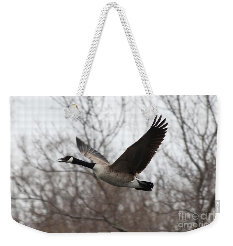Goose Weekender Tote Bag featuring the photograph Goose by Lori Tordsen