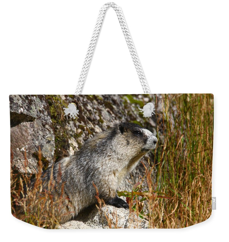 Doug Lloyd Weekender Tote Bag featuring the photograph Hoary Marmot by Doug Lloyd