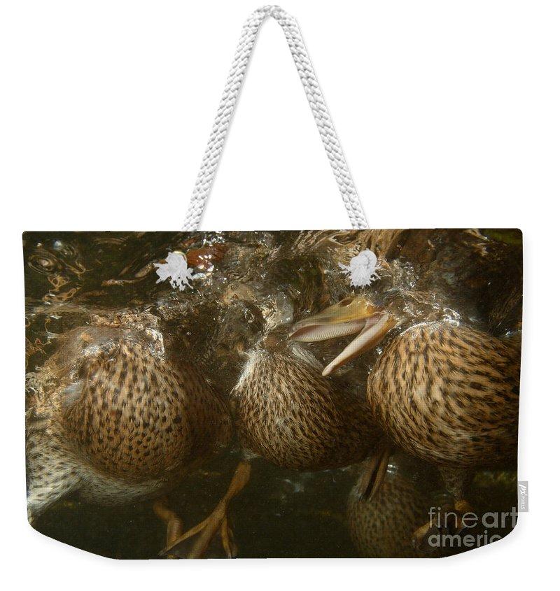Underwater Weekender Tote Bag featuring the photograph Mallard Ducks Underwater by Ted Kinsman