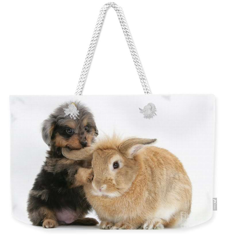 Animal Weekender Tote Bag featuring the photograph Puppy And Rabbit by Mark Taylor