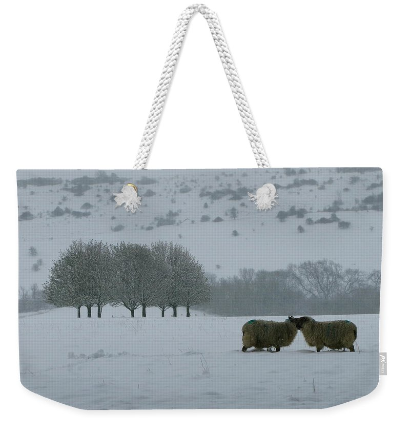 Snowy Hello Weekender Tote Bag featuring the photograph Snowy Hello by Maria Joy