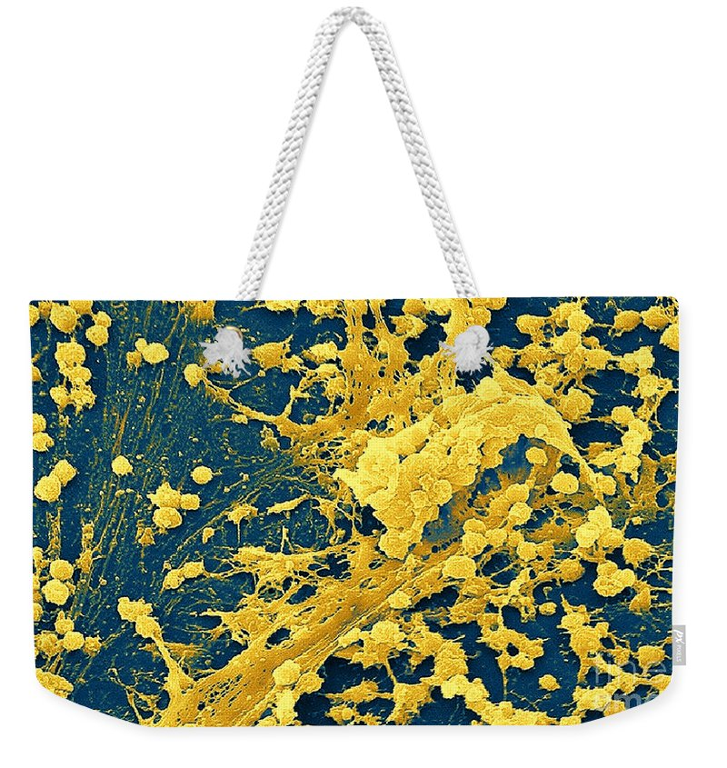 Bacteria Weekender Tote Bag featuring the photograph Staphylococcus Biofilm by Science Source