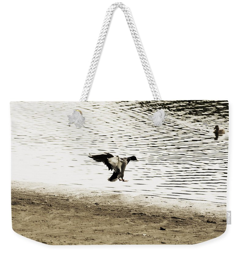 Mallard Duck Preparing To Land Weekender Tote Bag featuring the photograph The Landing by Douglas Barnard