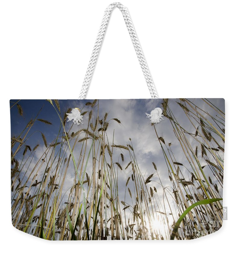 White Weekender Tote Bag featuring the photograph Wheat Field by Mats Silvan