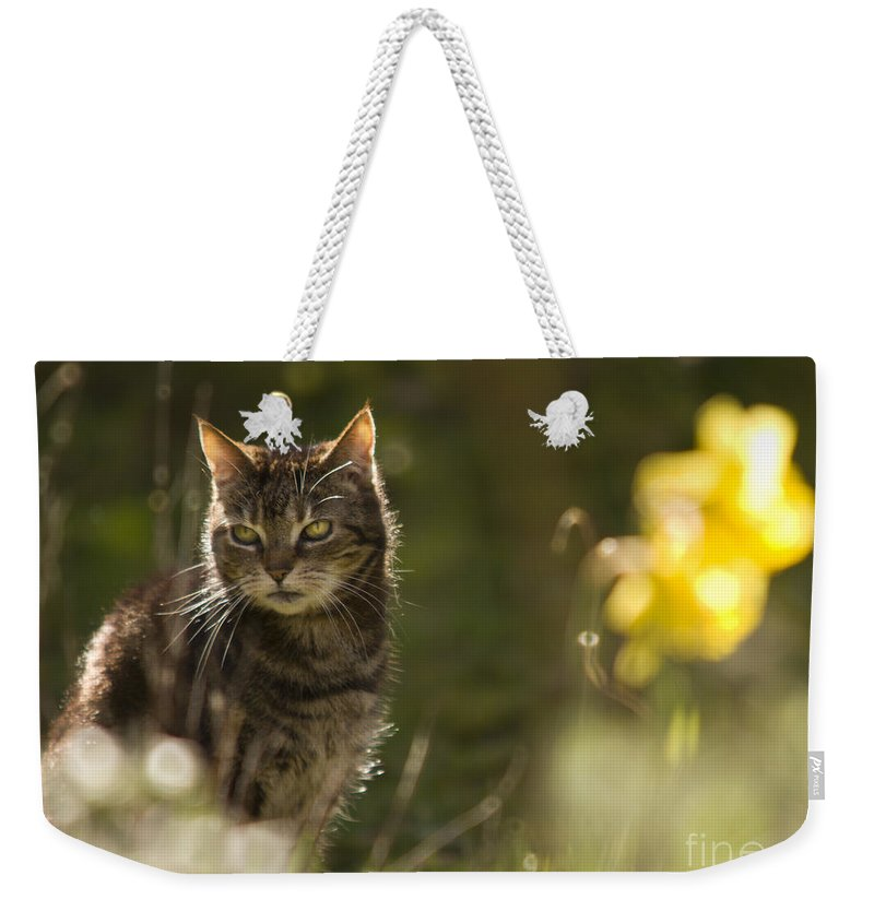 Cat Weekender Tote Bag featuring the photograph Wonky Eyed Tiger 2 by Angel Ciesniarska