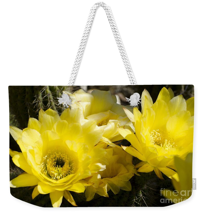 Cactus Weekender Tote Bag featuring the photograph Yellow Cactus Flowers by Jim And Emily Bush