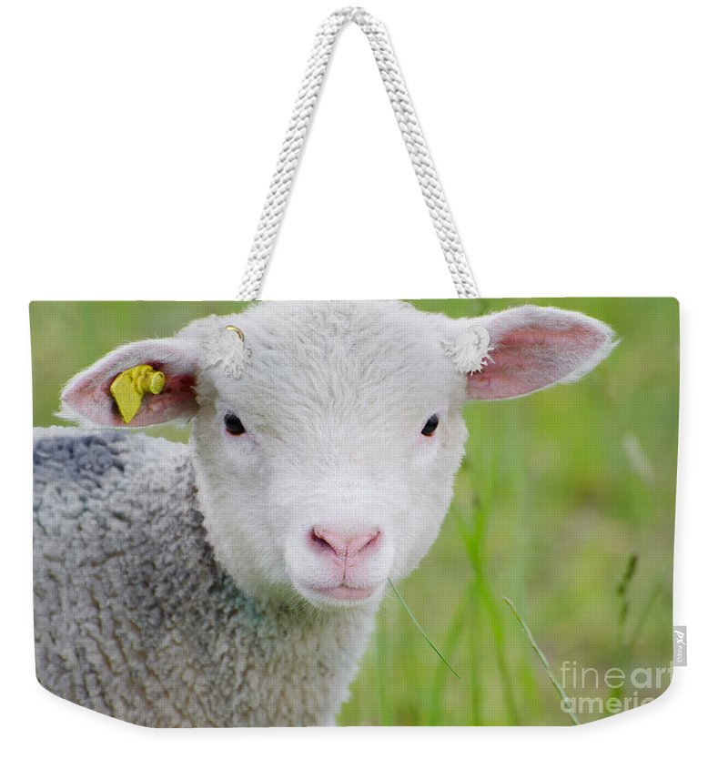 Sheep Weekender Tote Bag featuring the photograph Young Sheep by Mats Silvan