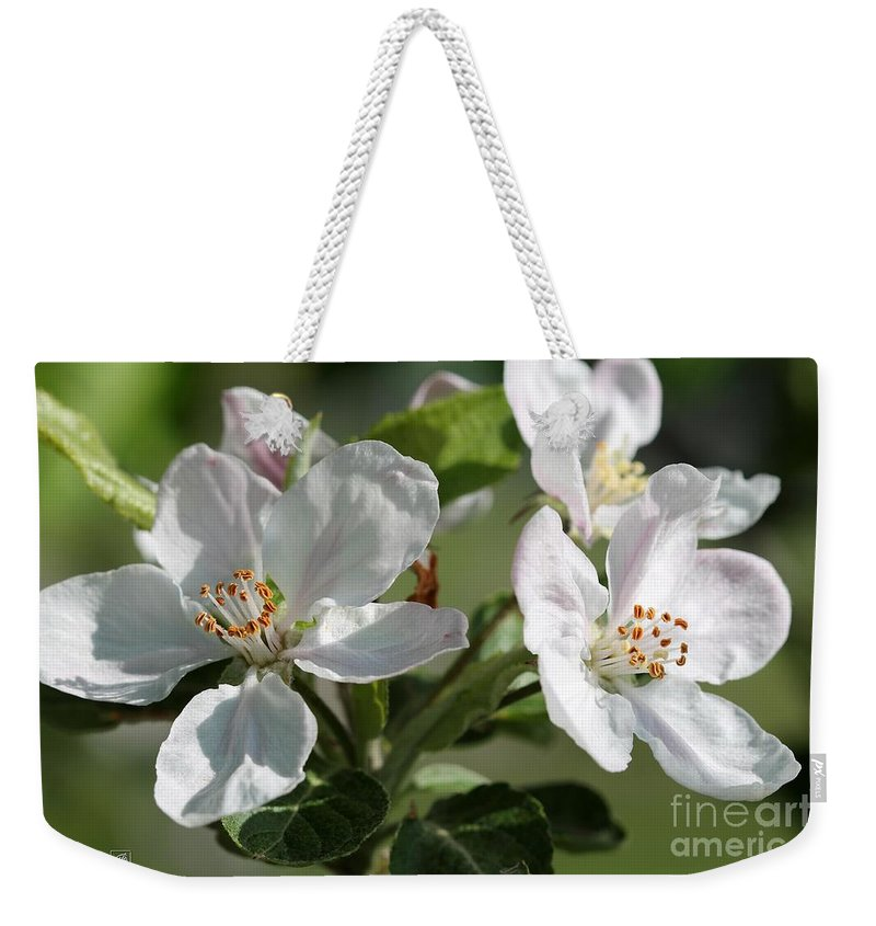Apple Weekender Tote Bag featuring the photograph Apple Blossom by J McCombie