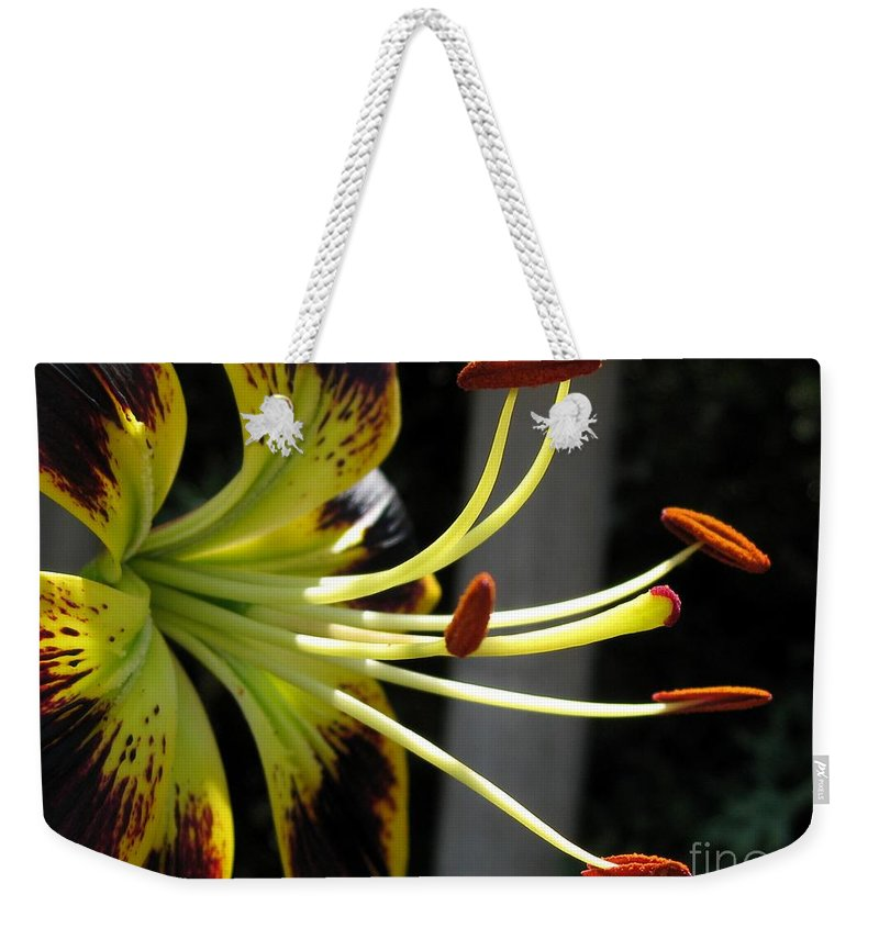 Asiatic Lily Weekender Tote Bag featuring the photograph Asiatic Lily Named Black-eyed Cindy by J McCombie