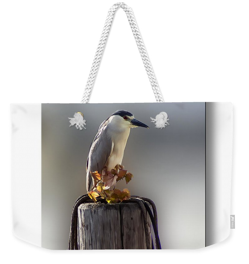 2d Weekender Tote Bag featuring the photograph Black Crowned Night Heron by Brian Wallace