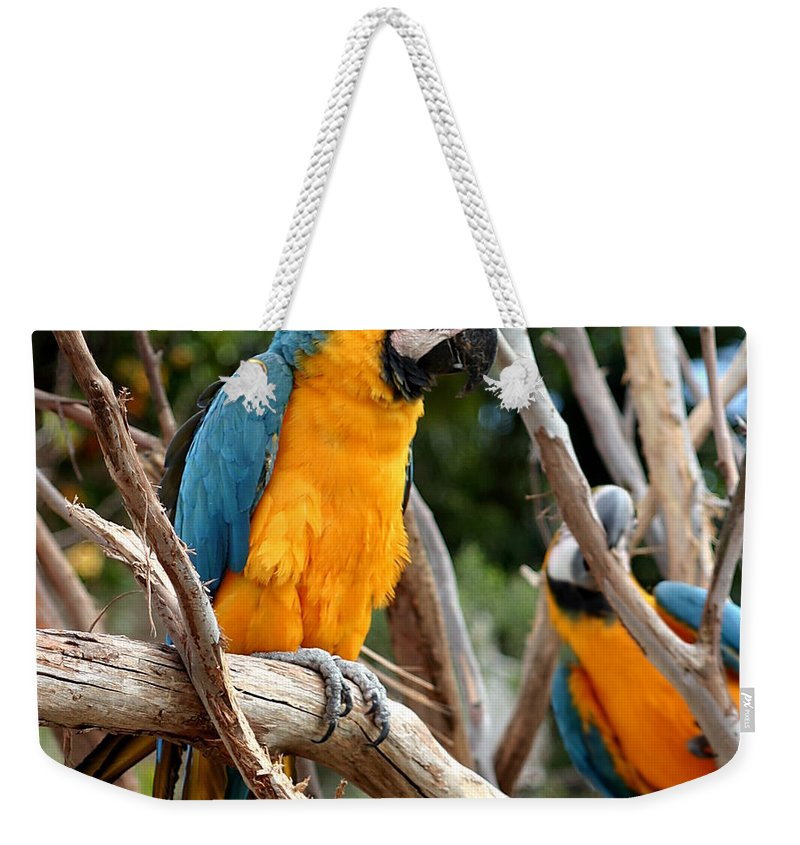 Blue Weekender Tote Bag featuring the photograph Blue And Gold Macaw by Henrik Lehnerer