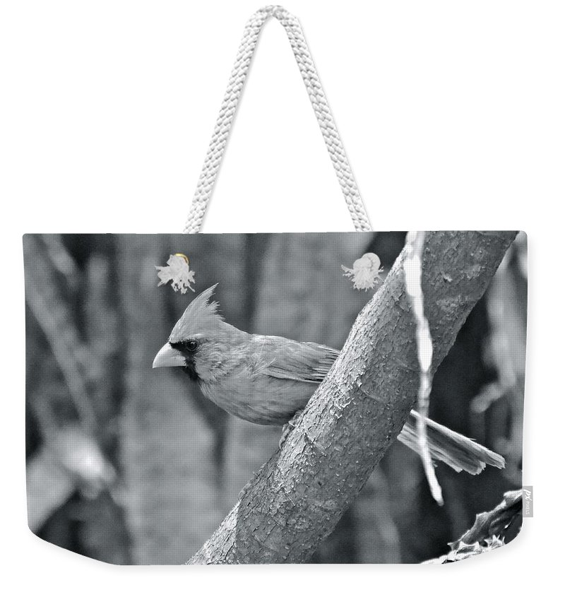 Cardinal Weekender Tote Bag featuring the photograph Cardinal by Carol Bradley