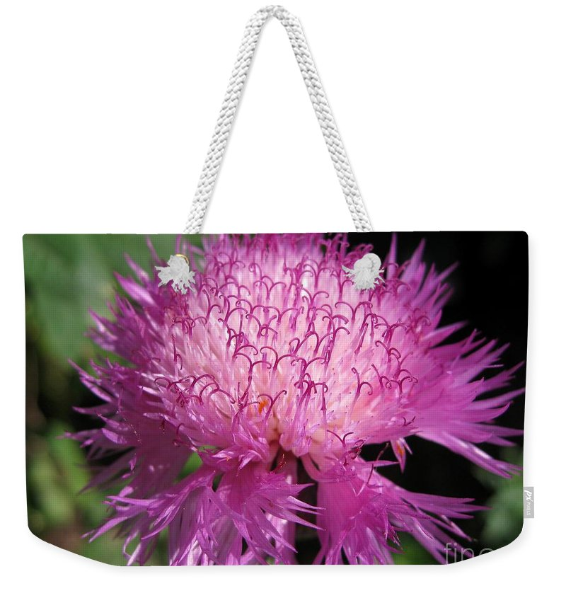 Centaurea Weekender Tote Bag featuring the photograph Centaurea From The Sweet Sultan Mix by J McCombie
