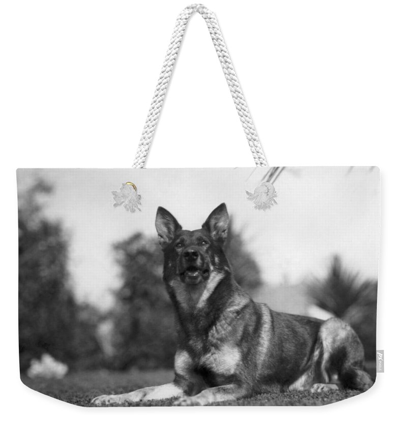 1920s Weekender Tote Bag featuring the photograph Rin-tin-tin (1916-1932) by Granger