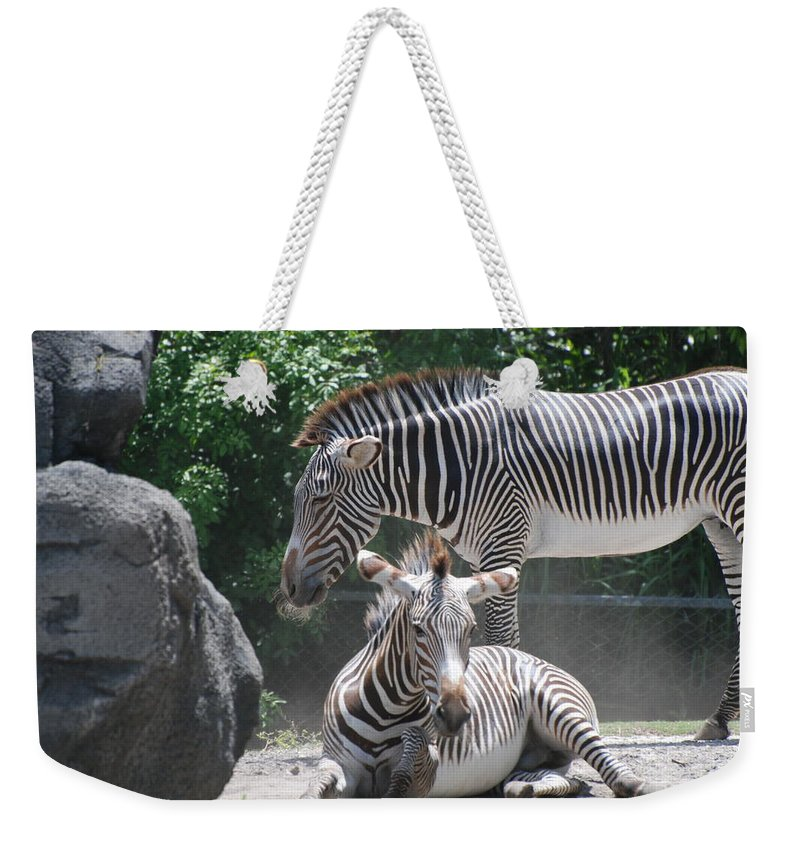Animal Weekender Tote Bag featuring the photograph Zebras by Rob Hans