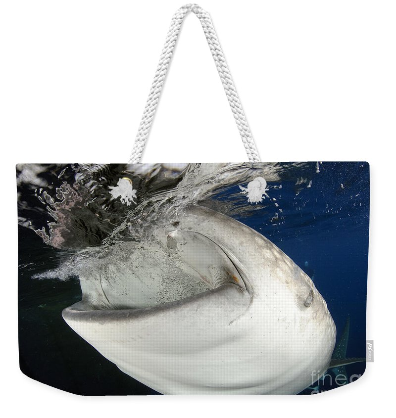 Headshot Weekender Tote Bag featuring the photograph Whale Shark Feeding Under Fishing by Steve Jones