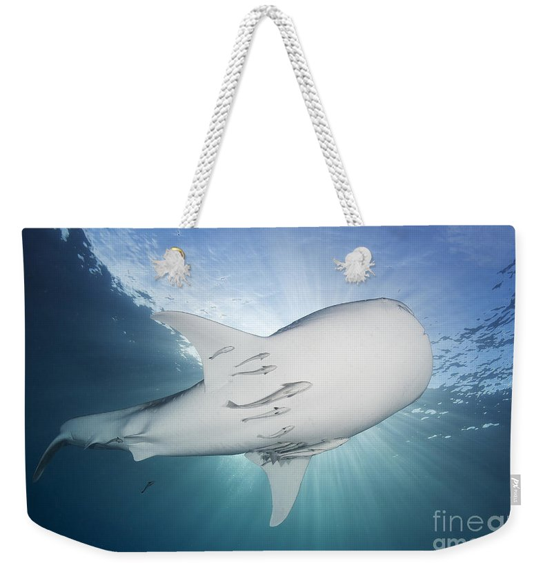 Symbiotic Relationship Weekender Tote Bag featuring the photograph Whale Shark Feeding Under Fishing by Steve Jones