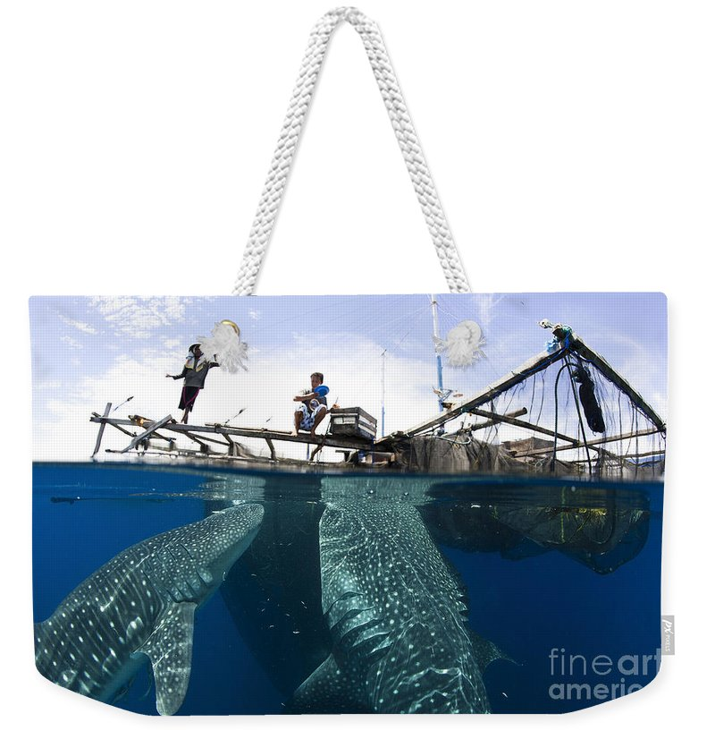 Holding Weekender Tote Bag featuring the photograph Whale Shark Feeding Under Fishing by Steve Jones