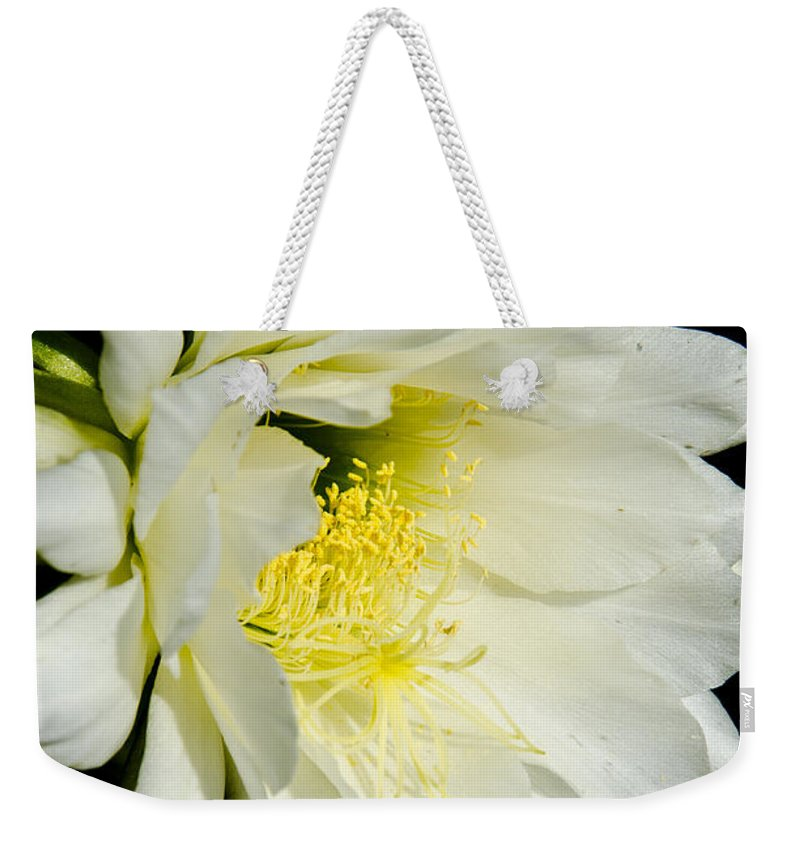 Cactus Weekender Tote Bag featuring the photograph White Cactus Flower by Jim And Emily Bush