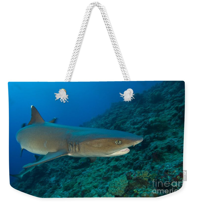 Kimbe Bay Weekender Tote Bag featuring the photograph Whitetip Reef Shark, Kimbe Bay, Papua by Steve Jones