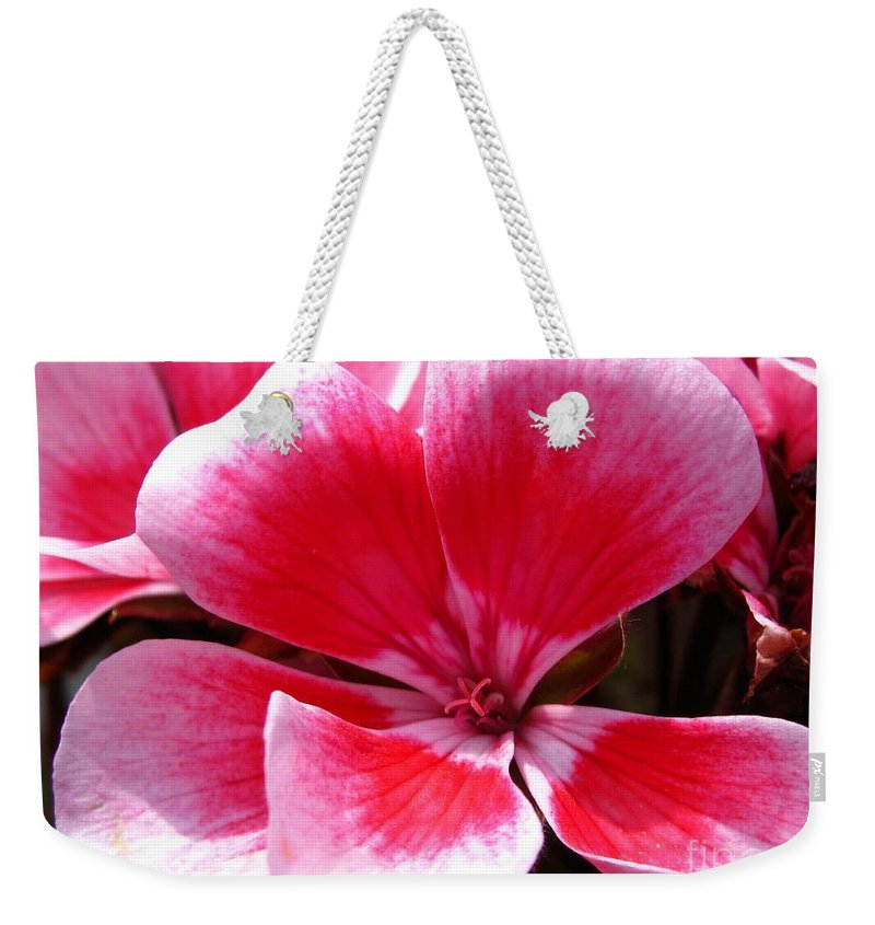 Zonal Geranium Weekender Tote Bag featuring the photograph Zonal Geranium Named Candy Fantasy Kiss by J McCombie