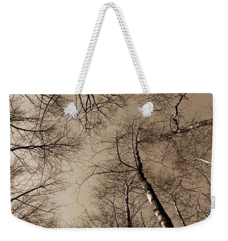 Epping Weekender Tote Bag featuring the photograph Epping Forest Trees by David Pyatt