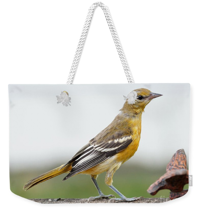 Orioles Weekender Tote Bag featuring the photograph Oriole by Lori Tordsen