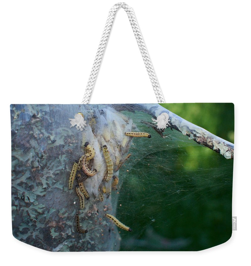 Jouko Lehto Weekender Tote Bag featuring the photograph Bird-cherry Ermine Caterpillars by Jouko Lehto