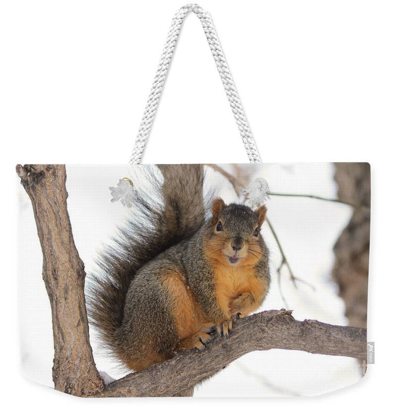 Squirrel Weekender Tote Bag featuring the photograph Squirrel by Lori Tordsen