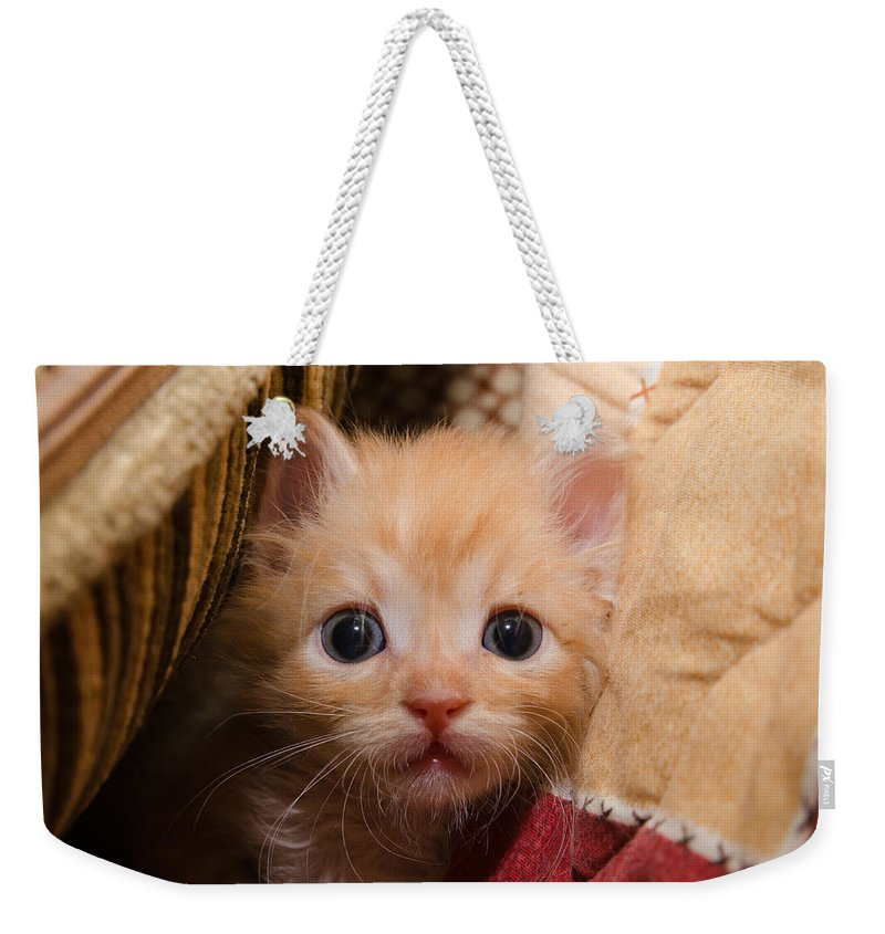 Animal Weekender Tote Bag featuring the photograph Kitty by Michael Goyberg