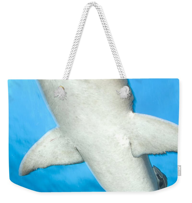 Kimbe Bay Weekender Tote Bag featuring the photograph Whitetip Reef Shark, Kimbe Bay, Papua by Steve Jones