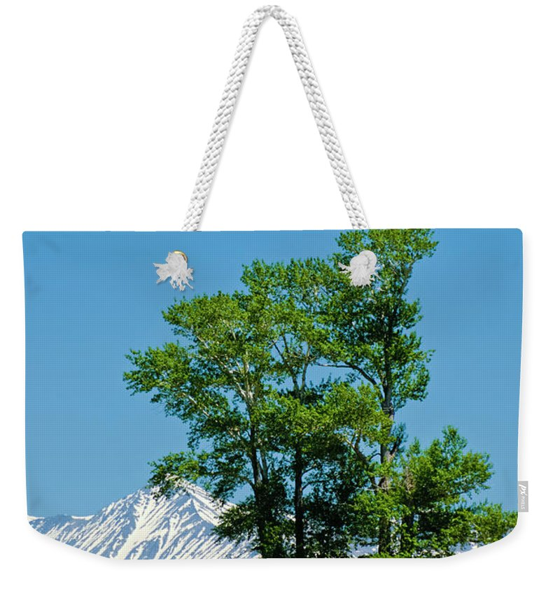 Americas Weekender Tote Bag featuring the photograph A Bit Of Shade by Roderick Bley