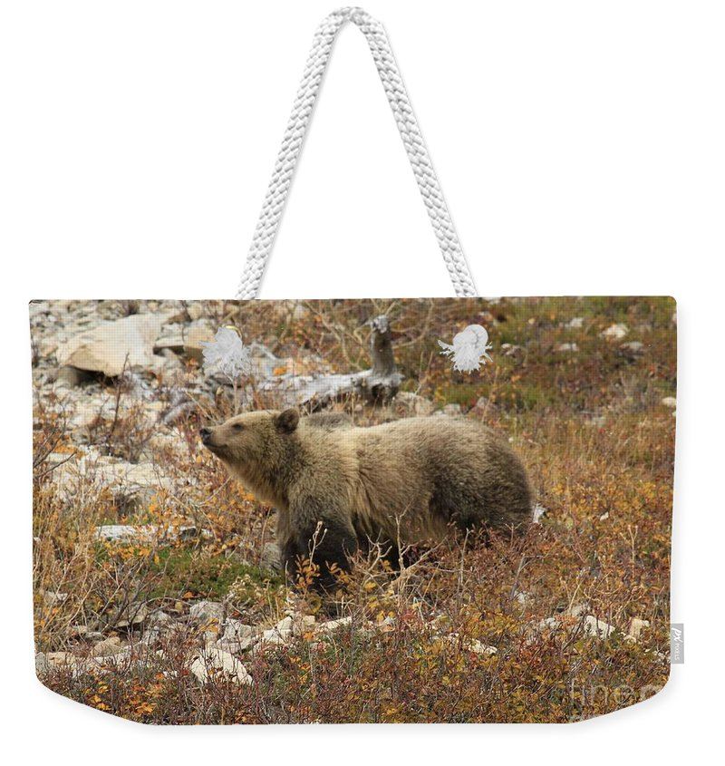 Grizzly Bear Weekender Tote Bag featuring the photograph A Breath Of Fresh Air by Adam Jewell