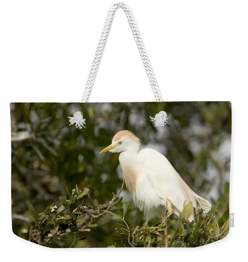 Bird Rookeries Weekender Tote Bag featuring the photograph A Cattle Egret Bubulcus Ibis by Tim Laman