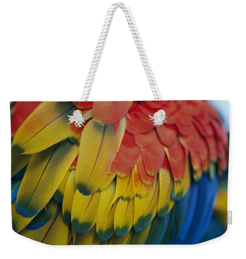 Saint Lucia Weekender Tote Bag featuring the photograph A Close-up View Of A Parrots Rainbow by Todd Gipstein